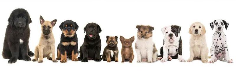 Puppy Classes Header